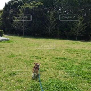 走る犬の写真・画像素材[4142553]