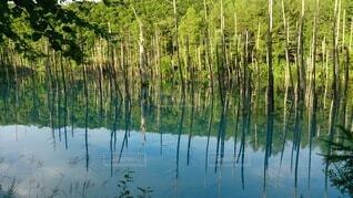 鏡のような池の写真・画像素材[4142557]