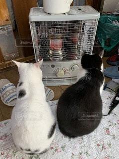 ストーブの前で暖をとる猫の写真・画像素材[4152446]
