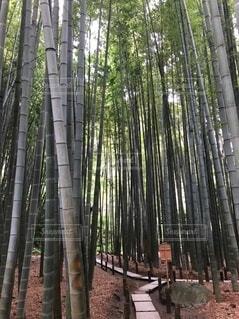 竹の中にある道の写真・画像素材[4153962]