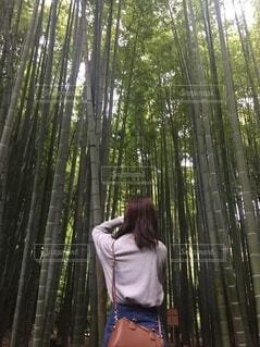 竹藪の中で写真を撮る女性の写真・画像素材[4153963]