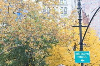 ニューヨークの街並みの写真・画像素材[4138664]