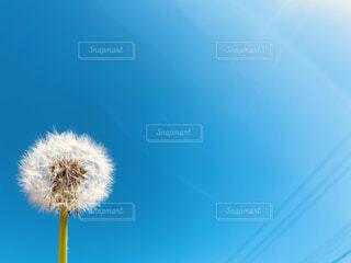 太陽とタンポポの会話の写真・画像素材[4272546]