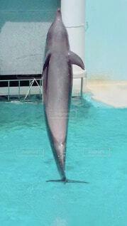 演技をするイルカの写真・画像素材[4144549]