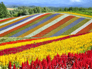 お花畑の写真・画像素材[201339]