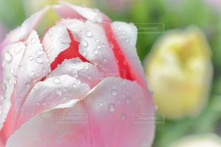 自然の写真・画像素材[528799]