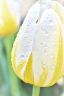 花の写真・画像素材[528800]
