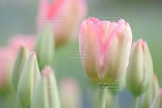 花の写真・画像素材[531174]