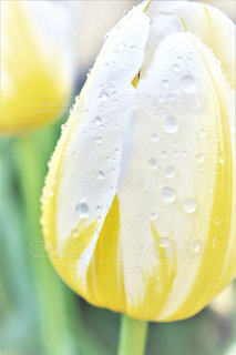 花の写真・画像素材[531177]