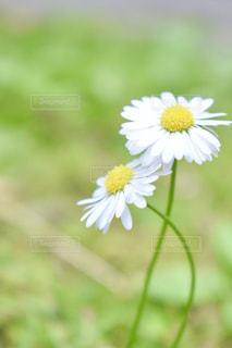 自然の写真・画像素材[558191]