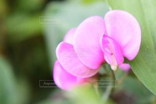 花の写真・画像素材[604831]