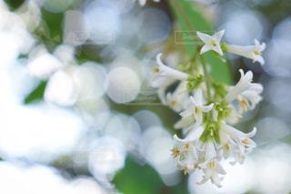 花の写真・画像素材[604832]