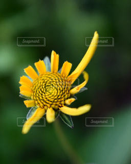 花の写真・画像素材[604833]