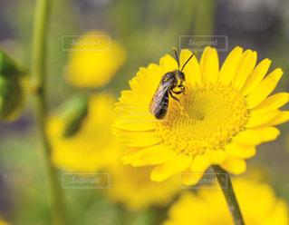 花の写真・画像素材[604834]