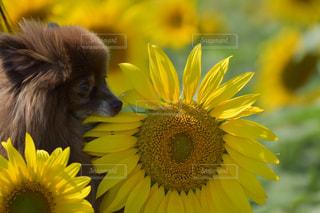 犬の写真・画像素材[669632]