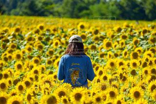 花の写真・画像素材[678587]