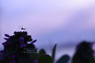 近くの花のアップの写真・画像素材[1215484]