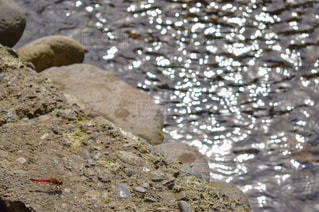 近くの岩のアップの写真・画像素材[1477877]