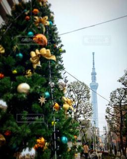 クリスマスのスカイツリーの写真・画像素材[1692906]