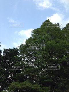 森林 - No.176699