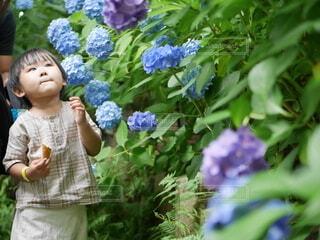 紫陽花を見つめる子供の写真・画像素材[4149471]