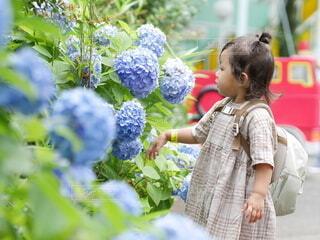 紫陽花を見つめる女の子の写真・画像素材[4149470]