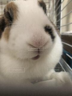 ウサギのズームアップの写真・画像素材[4340855]