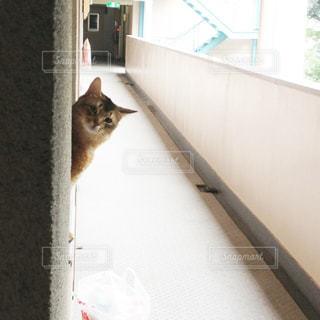 猫の写真・画像素材[176444]