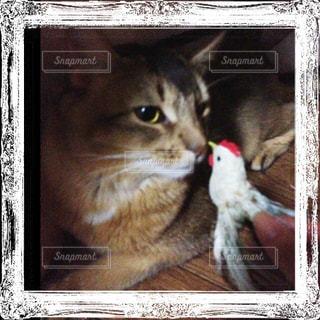 猫の写真・画像素材[176446]