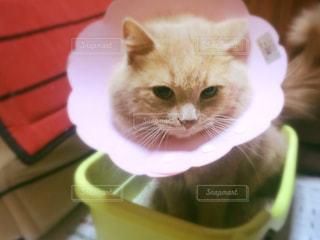猫の写真・画像素材[176695]