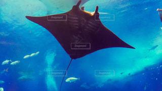 水面下を泳ぐ魚たちの写真・画像素材[1688784]
