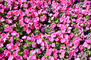 春の花の写真・画像素材[4345354]