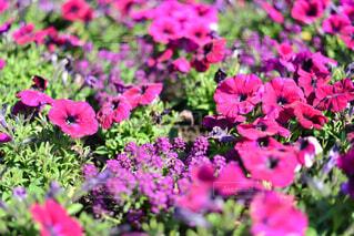 春の花の写真・画像素材[4345380]
