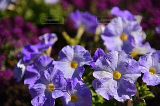 春の花の写真・画像素材[4345378]