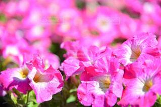 春の花の写真・画像素材[4345382]