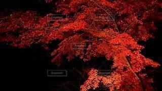 木のクローズアップの写真・画像素材[4150486]