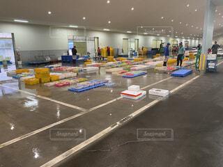 朝の魚市場の写真・画像素材[4609591]