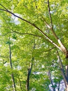 猛暑日の街なかにある公園で木々に囲まれ涼をとるの写真・画像素材[4696648]
