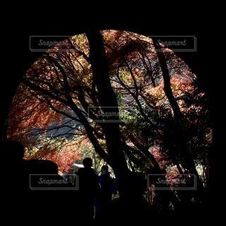 廃線トンネルからの紅葉の写真・画像素材[4154780]