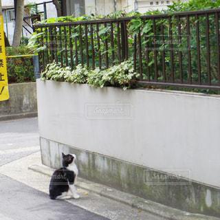 猫の写真・画像素材[176708]