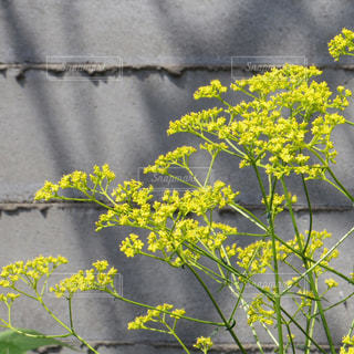 花の写真・画像素材[177172]