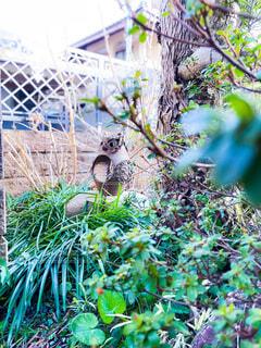 庭の住人の写真・画像素材[4152399]