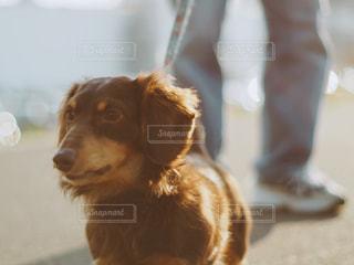 No.375889 犬