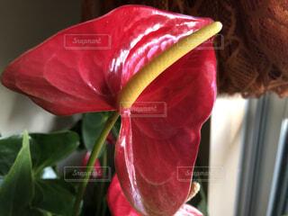 花のクローズアップの写真・画像素材[4156683]