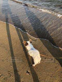 海が似合う犬の写真・画像素材[4159581]