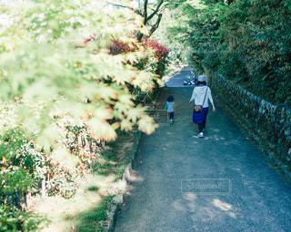 公園の写真・画像素材[505069]