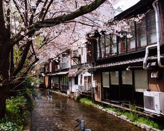 桜の写真・画像素材[506767]