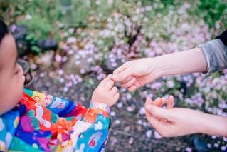 春の写真・画像素材[506769]