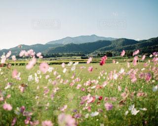 背景の山の茂みのグループの写真・画像素材[1002907]