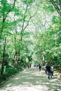 糺の森の写真・画像素材[1002986]